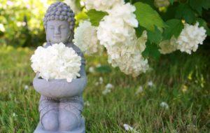 buddha, wellness, meditation